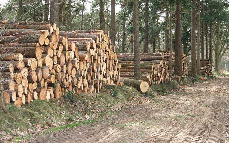 houtmarkt - hout verkopen