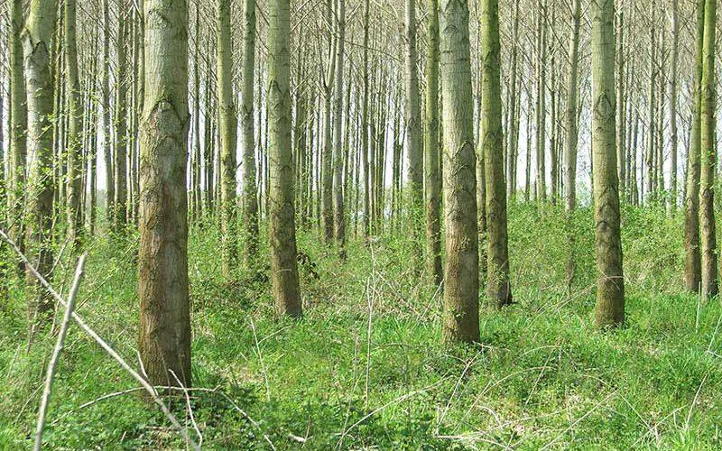 verantwoord bosbeheer