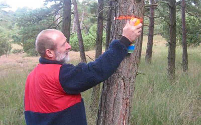 duurzaam bosbeheer -  QD-methode