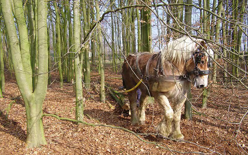 duurzaam bosbeheer -  oogst van hout