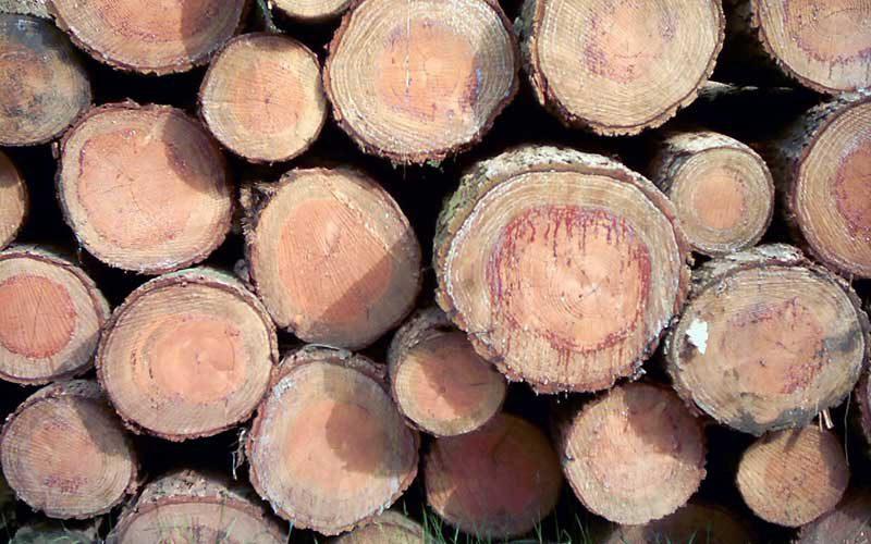 houtmarkt - hout kopen