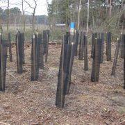 bosaanplant met kloempen