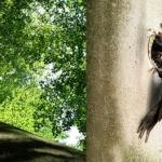 Nieuwe handleidingen eco2eco bieden innovatieve handvatten voor boomgericht bosbeheer