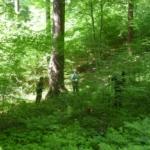 Hoe de focus op kwaliteitshout het verschil kan maken voor de bosgebonden biodiversiteit