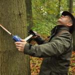 Succesvolle verkoop van topkwaliteit boomstammen op Vlaams Houtpark