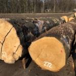 Tweede Vlaams houtpark voor meer lokale verwerking van Vlaams hout
