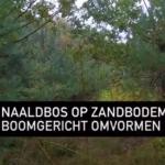 Video bosomvorming via boomgericht bosbeheer: een praktijkvoorbeeld
